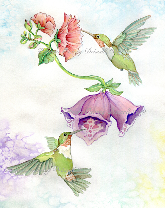 1 HUMMINGBIRD DONEcopyright