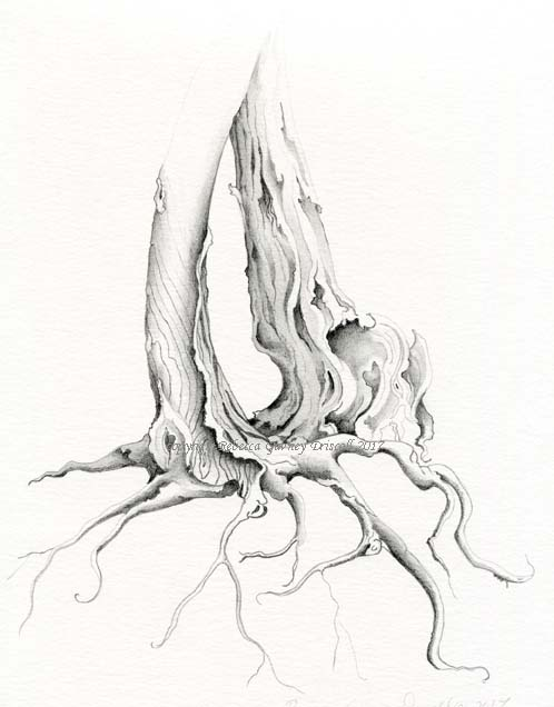 1 Tree sketch DONE copyright